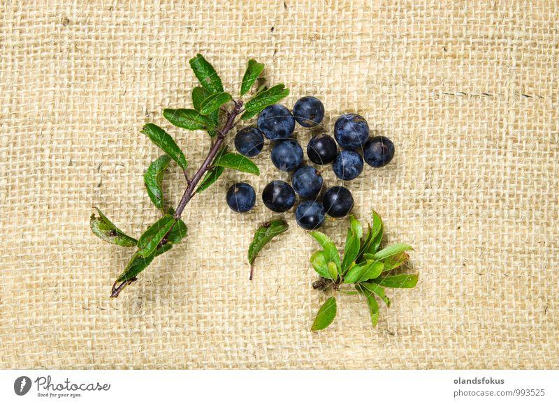 Blackthorn berries Nature Blue Plant Green Leaf Autumn Natural Wild Fruit Fresh Harvest Berries Dessert Vegetarian diet Organic