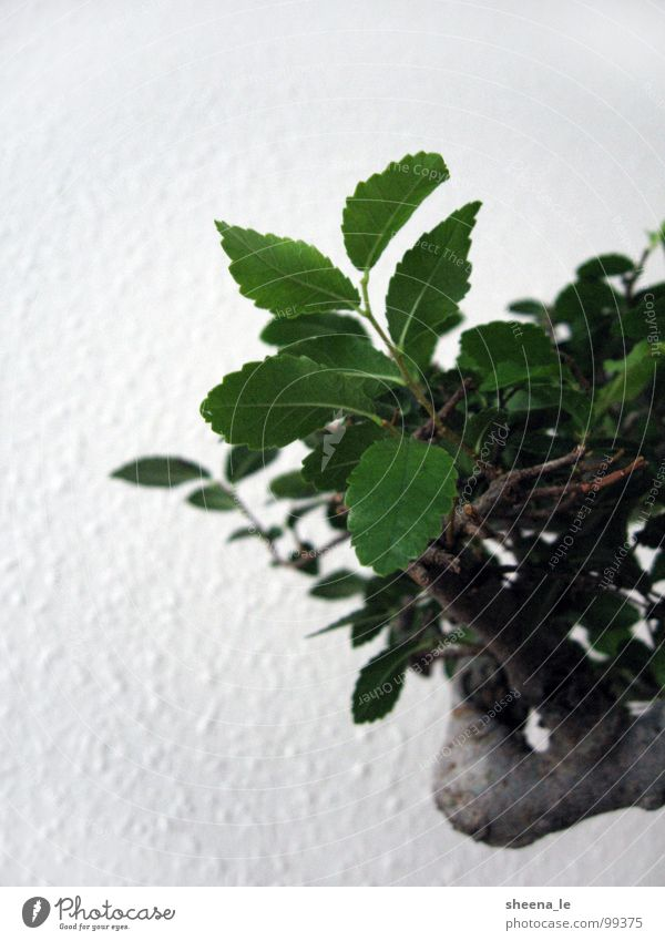 Nature Plant Green Beautiful Summer Tree Leaf Life Art Earth Decoration Power Tree trunk Asia South Japan