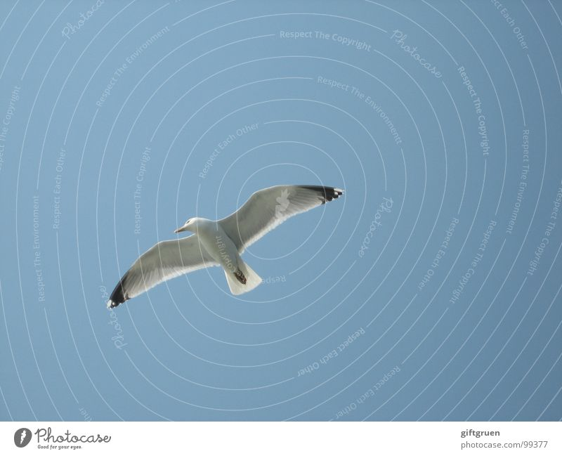Sky White Ocean Blue Beach Bird Coast Flying Aviation Wing Beautiful weather Seagull Hover Blue sky