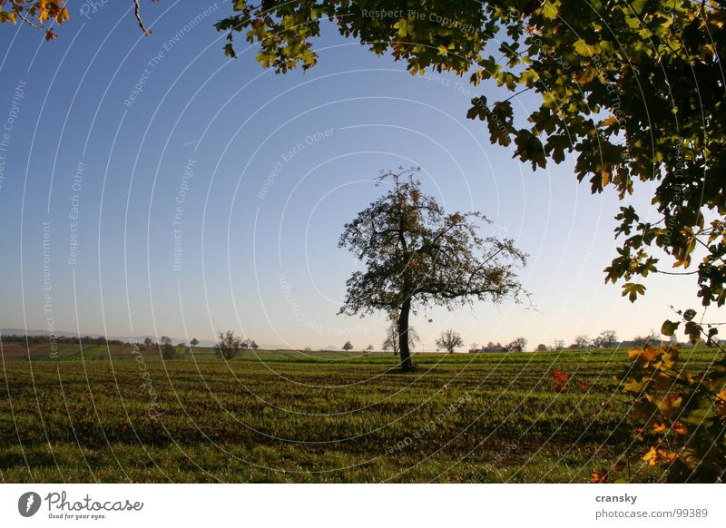 Sky Nature Plant Tree Leaf Calm Landscape Environment Meadow Death Autumn Emotions Sadness Healthy Dream Moody
