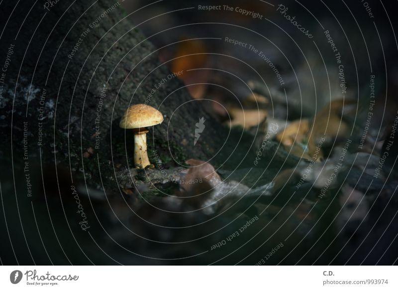 Nature Tree Loneliness Leaf Dark Growth Mushroom Autumnal