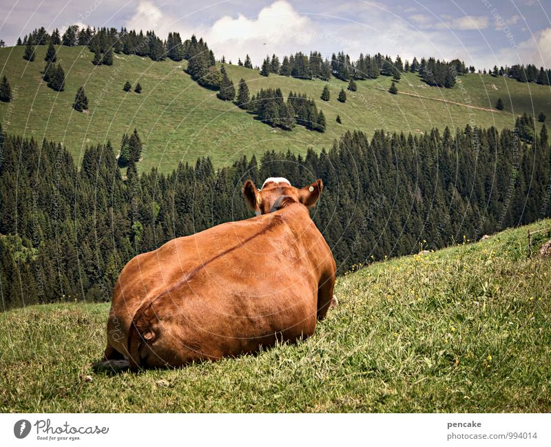 I've got a move on. Nature Landscape Sky Clouds Summer Beautiful weather Meadow Alps Animal Farm animal 1 Sign To enjoy Lie Looking Warmth Feminine