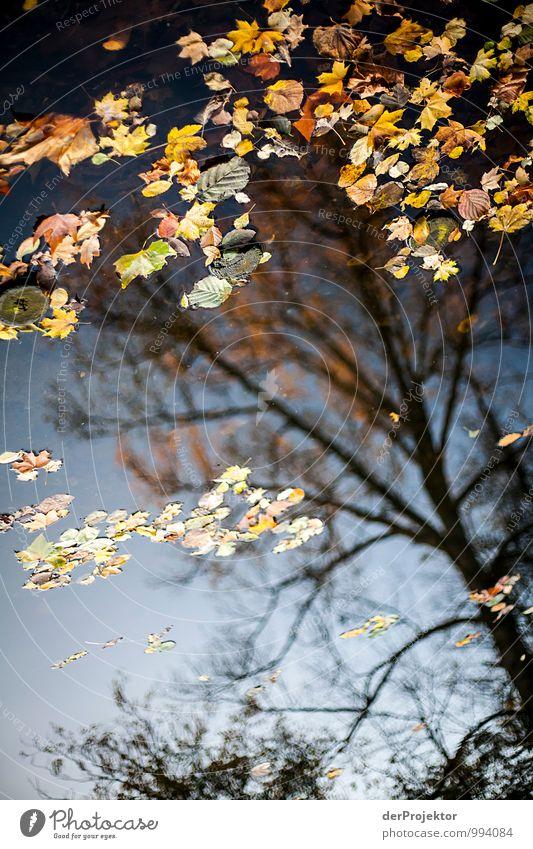 Nature Vacation & Travel Plant Tree Landscape Leaf Joy Environment Sadness Emotions Autumn Berlin Lake Park Tourism Hiking