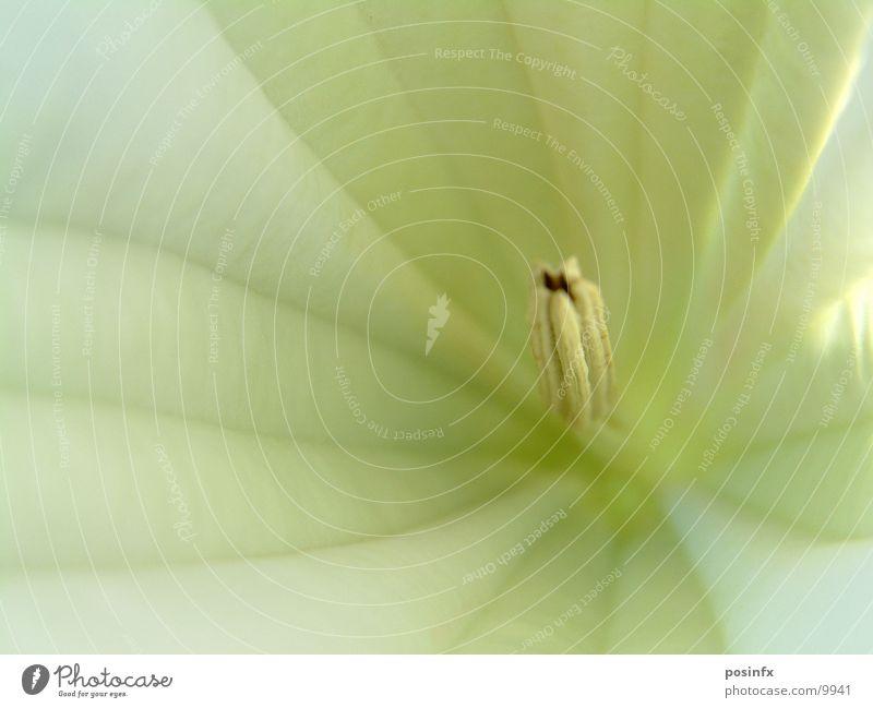 WHITE*FLOWER Flower