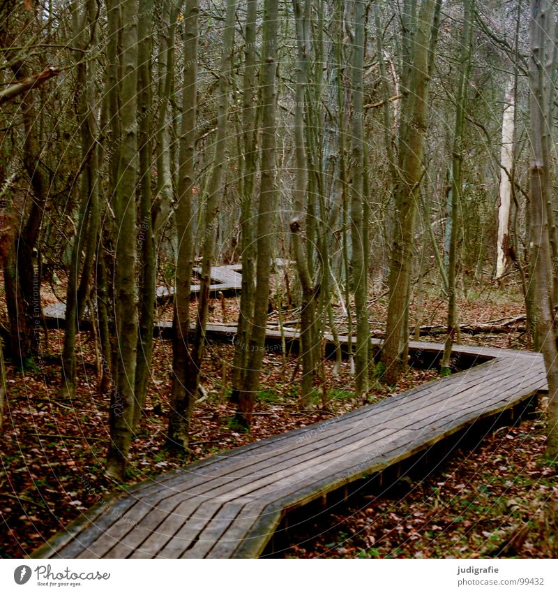 Winter Leaf Forest Wood Lanes & trails Line Clarity Laws and Regulations Footbridge National Park Zigzag