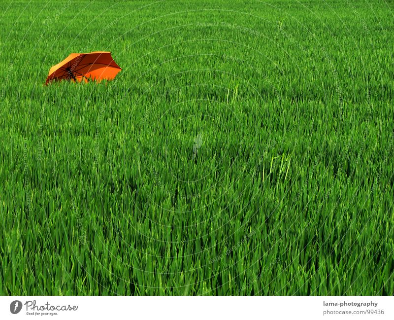 Pushed in the corner Cloppenburg Umbrella Sunshade Storm Clouds Grass Blade of grass Meadow Summer Field Green Spring Calm Loneliness Relaxation Sunbathing