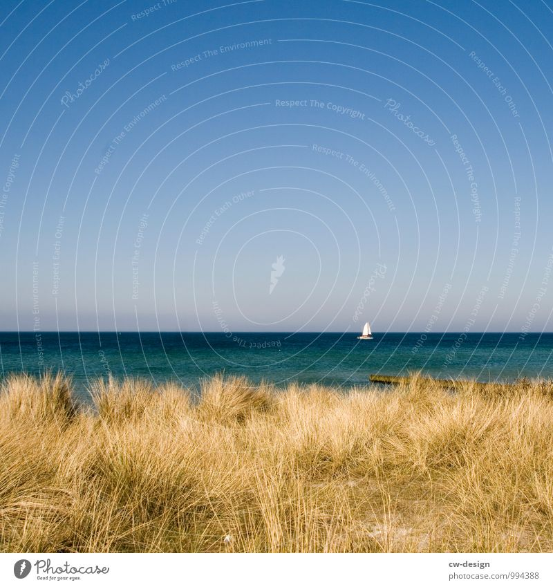 Sailing ship sails on Baltic Sea past Hiddensee Beach duene Marram grass Ocean coast Sky Exterior shot Colour photo Landscape Vacation & Travel Nature Deserted