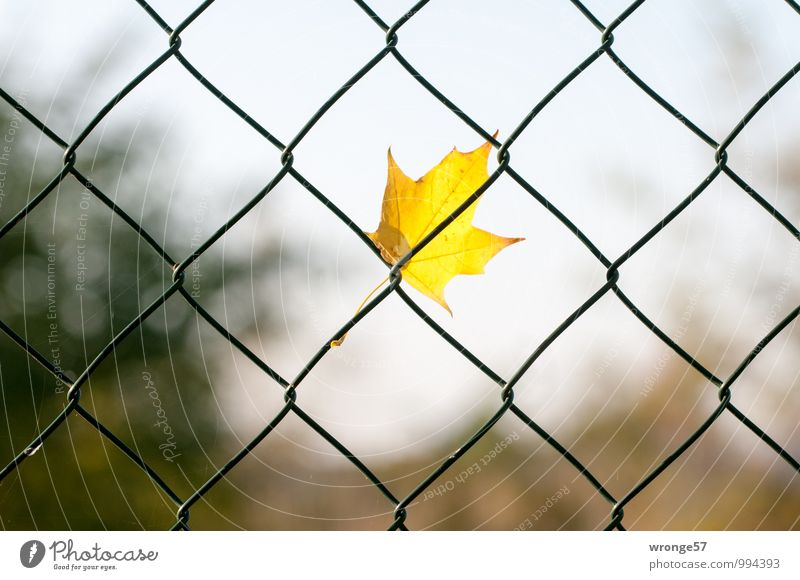 Green Leaf Yellow Autumn - a Royalty Free Stock Photo from Photocase