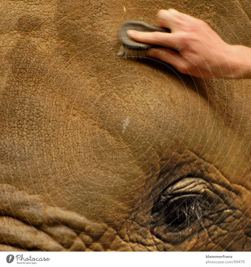 New hairstyle Elephant Long-haired Berlin zoo Gray Laundry Eyelash Eyebrow Services Craft (trade) Hand Cleaning Schönbrunn palace Vienna Zoo Africa at