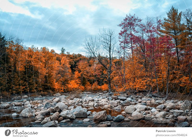autumn forest Wellness Harmonious Well-being Contentment Vacation & Travel Tourism Trip Adventure Far-off places Freedom Environment Nature Landscape Elements