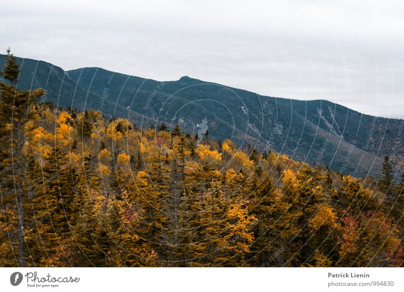Autumn colouring in the White Mountains Harmonious Well-being Contentment Senses Relaxation Calm Tourism Trip Adventure Far-off places Freedom Expedition