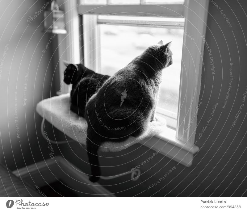 Cat Relaxation Calm House (Residential Structure) Animal Window Style Lifestyle Freedom Flat (apartment) Contentment Room Living or residing Leisure and hobbies Elegant Sit