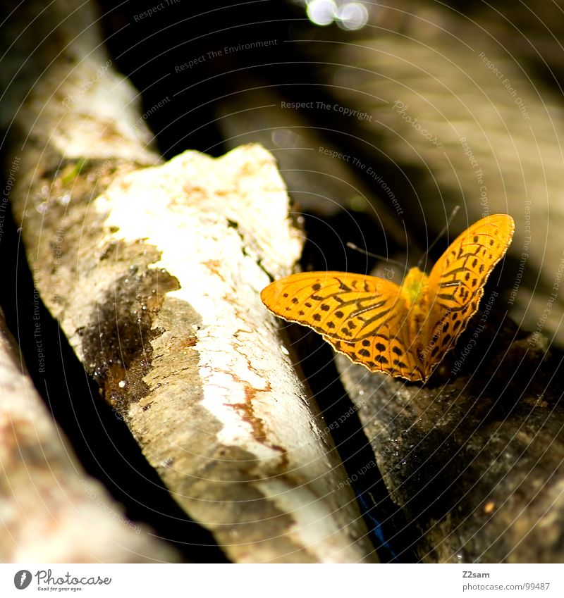 Nature Summer Animal Yellow Dark Wood Flying Wing Butterfly Tree trunk Feeler Spotted