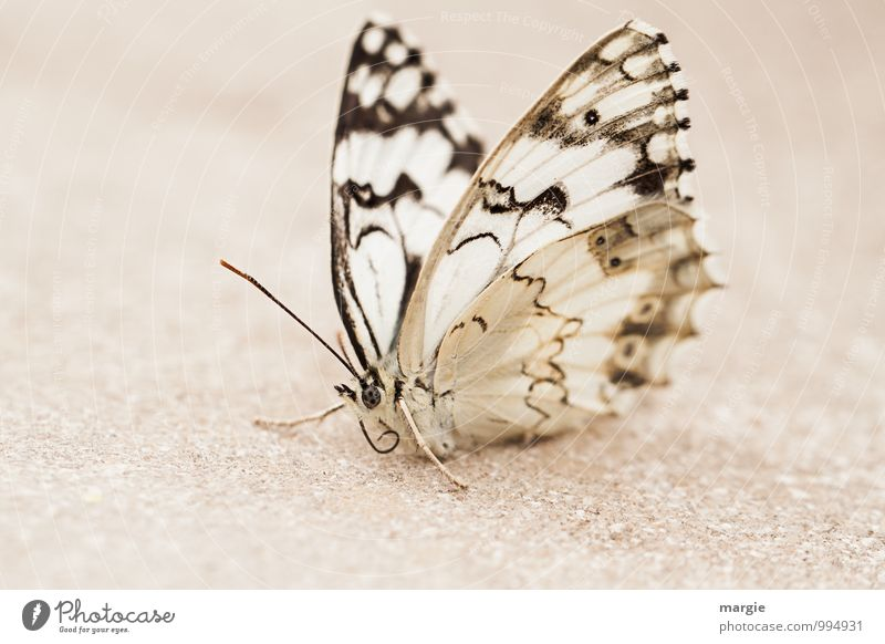 A butterfly in the sand Environment Nature Sand Animal Wild animal Butterfly 1 White pretty Calm Loneliness Exhaustion Contentment Uniqueness Elegant Relaxation