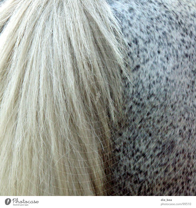 ...from behind Horse Tails Pelt Pattern Dappled Hind quarters Mammal Mold Hair and hairstyles