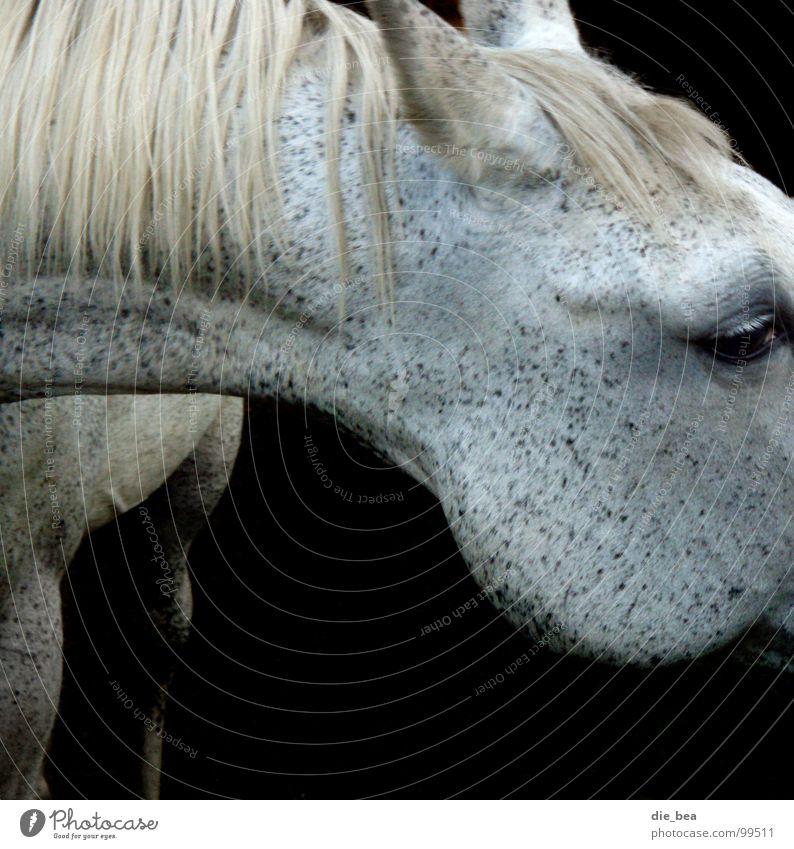 mildew Horse Mane Pattern Dappled Mammal Mold Neck Black & white photo Eyes