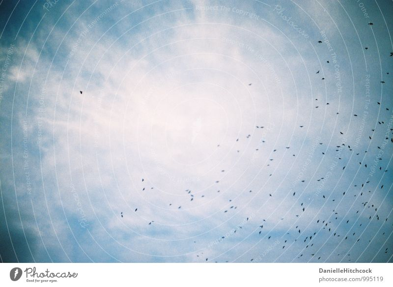 birds in the sky Nature Air Sky Clouds Summer Animal Bird Wing Flock Beautiful Freedom Flying animal Height Dreamily Daydream 35mm film Colour photo
