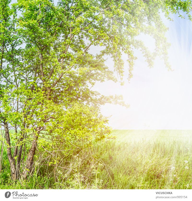 Nature Plant Heaven Summer Tree Leaf Spring Background picture Garden Jump Lifestyle Park Field Design Branch Beautiful weather
