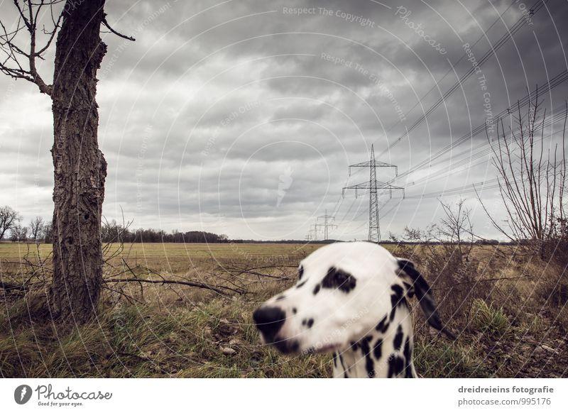 Dog Landscape Animal Far-off places Winter Dark Autumn Moody Horizon Weather Field Gloomy Threat Storm Gale Electricity pylon