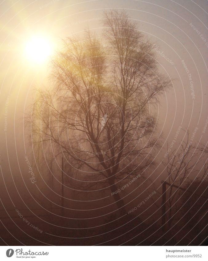 morning of fog Fog Tree Sunrise Cold