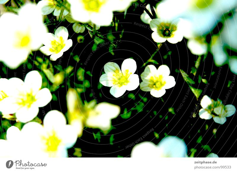 White Flower Green Summer Joy Yellow Meadow Happy Dream Bouquet