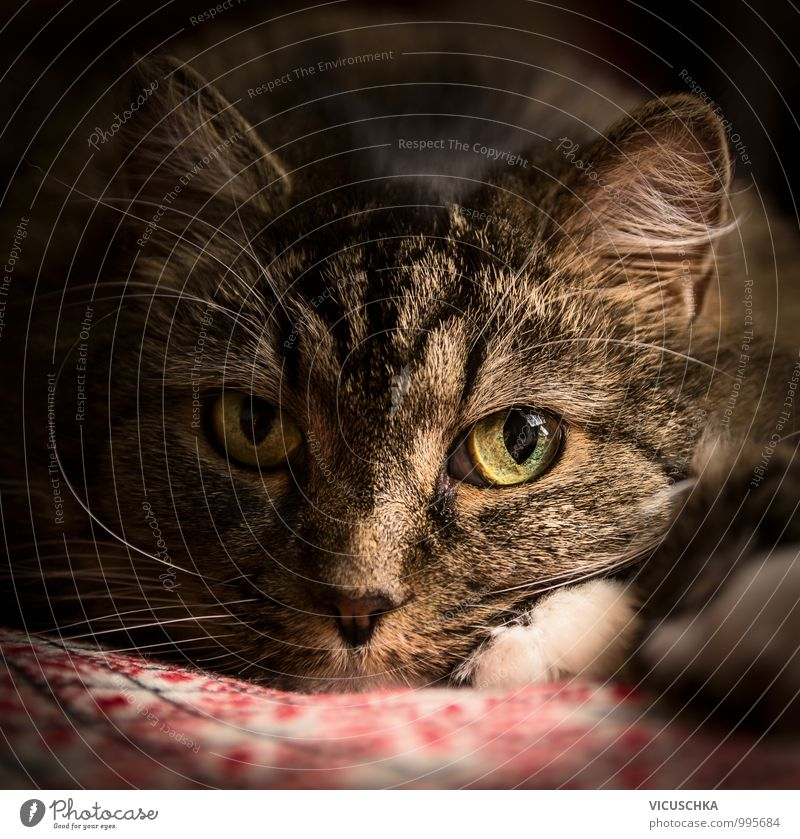 Thoughtful tomcat , Portrait Style Flat (apartment) Nature Wall (barrier) Wall (building) Animal Pet Cat 1 Dark Soft Cat's head Eyes Cozy Close-up