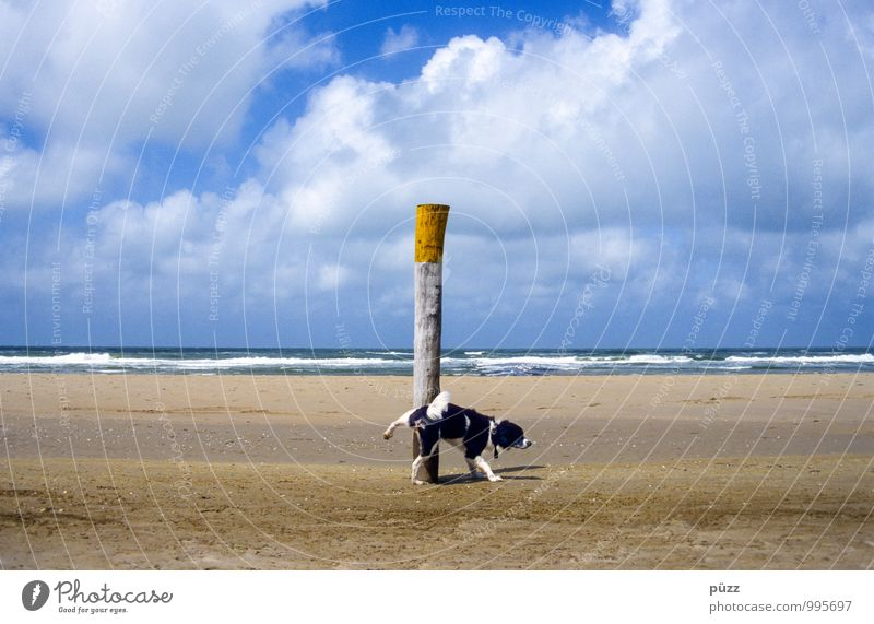 Dog Nature Blue White Water Summer Ocean Landscape Animal Beach Yellow Coast Funny Sand Legs Beautiful weather