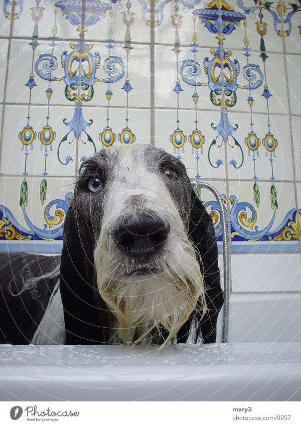 Eyes Dog Wet Nose Bathtub
