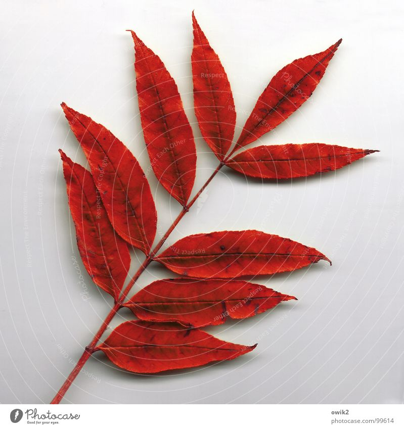 Nature Old Plant Beautiful Tree Red Leaf Autumn Together Gloomy Empty Transience Change Dry Twig Stalk