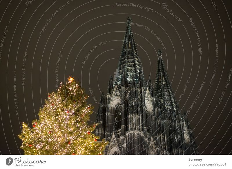 Three tips Christmas & Advent Cologne Town Downtown Church Dome Tourist Attraction Landmark Cologne Cathedral Illuminate Point Tower Fir tree Christmas Fair
