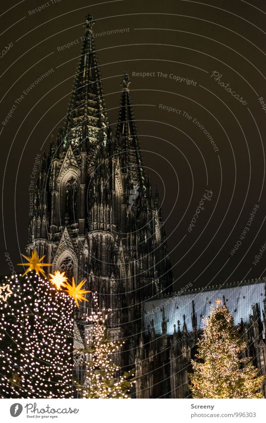 Christmas at the cathedral Christmas & Advent Cologne Town Downtown Church Dome Tourist Attraction Landmark Cologne Cathedral Illuminate Point Fir tree