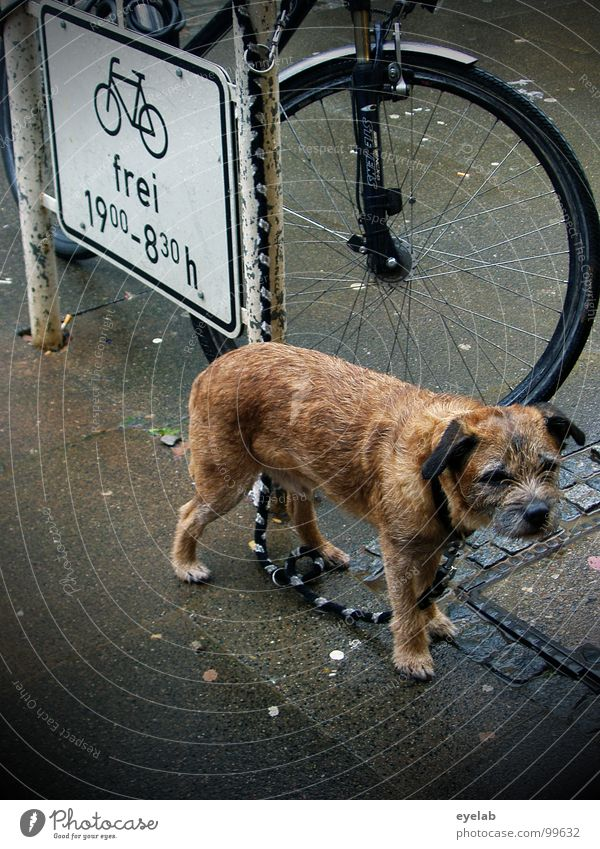 We have to stay outside. Dog Wet Damp Grief Leashed Sidewalk Pet Fork Rain Summer Aggravation Animal Disregard Exposed Pelt Street sign Mammal Signage Weather