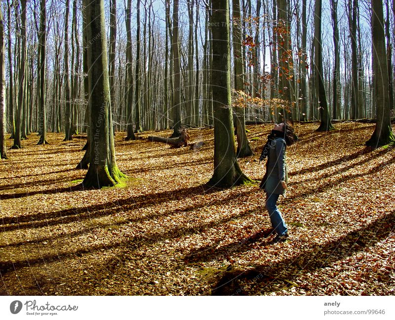 autumnless Forest Autumn Leaf Throw Brown Tree Exuberance Playing Joy To fall Blue sky Shadow To go for a walk
