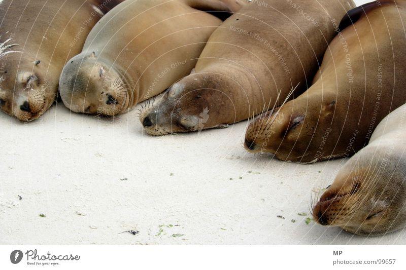 Beach Calm Animal Life Happy Dream Sand Contentment Funny Sleep Multiple Group of animals Peace Animal face Pelt Serene