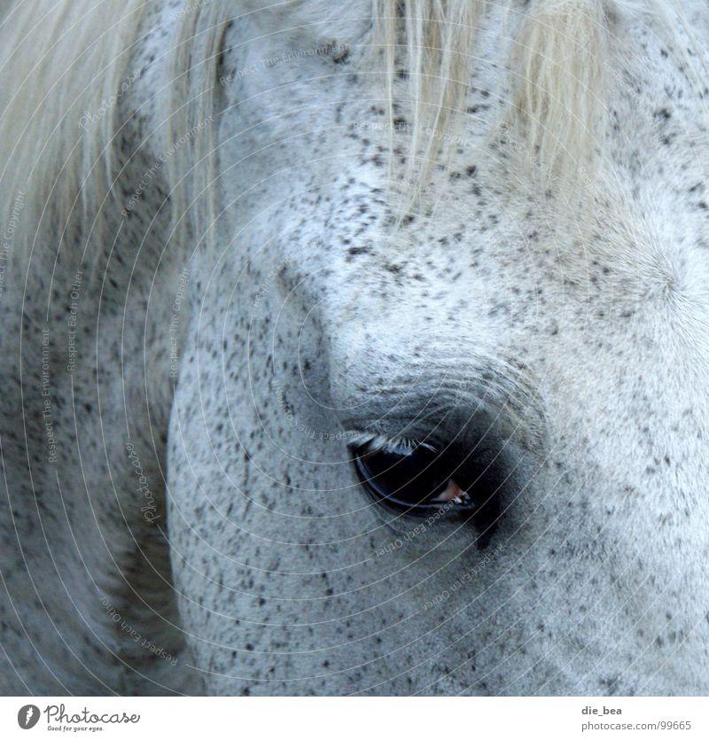 Let me see Horse Mane Eyelash Mammal Mold Eyes Black & white photo Dappled Wrinkles