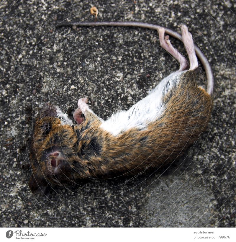 Animal Eyes Death Life Hair and hairstyles Small Legs Lie Nose Wet Nutrition Cute Transience Ear Pelt Mouse