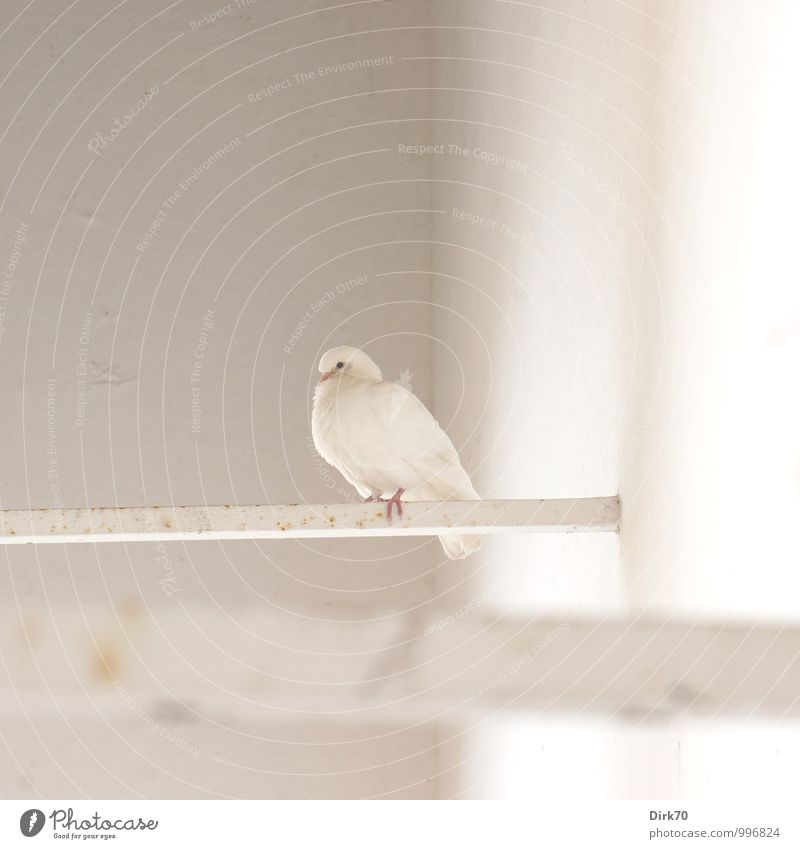 Beautiful White Loneliness Calm Animal Black Wall (building) Building Wall (barrier) Gray Bright Bird Metal Pink Wild animal Sit