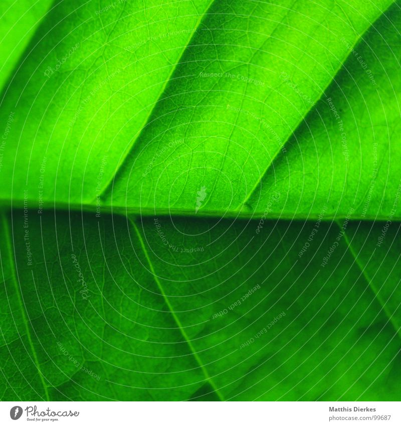 structure Leaf Green Tree Arrangement Hierarchy Border Home country Flat (apartment) Well-being Gaudy Lighting Green undertone Diagonal Carton Normal Summer