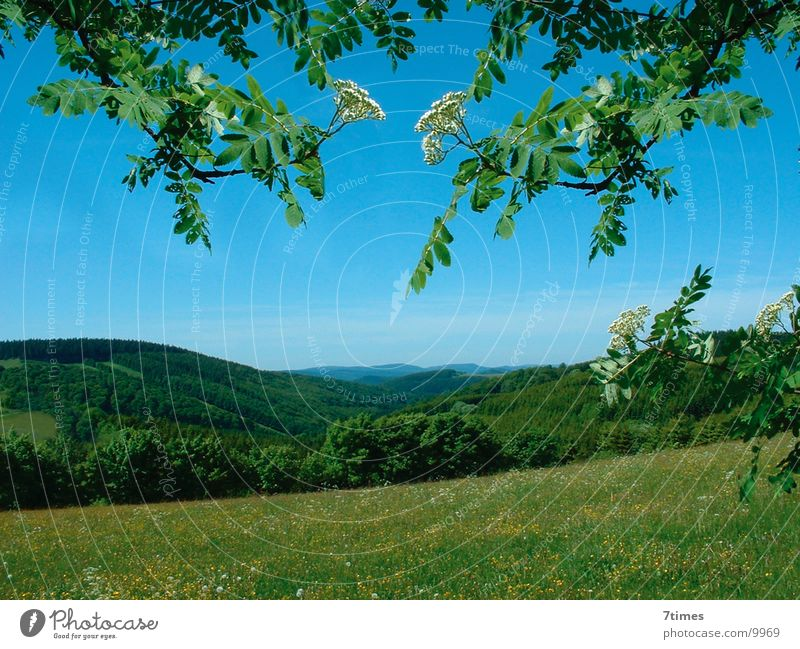 Tree Leaf Forest Meadow Mountain Landscape Twig