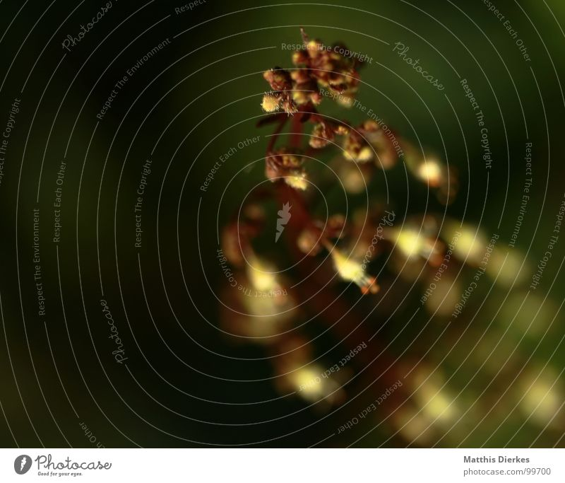 On the run Plant Bushes Tree Bell Blur Black Growth Beautiful Delicate Tendril Summer Garden tenderly