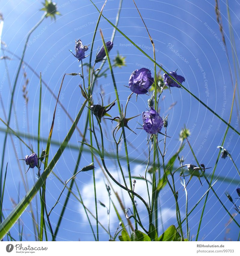 in the meadow Meadow Flower Bluebell Blade of grass Grass Stalk Clouds Worm's-eye view Vantage point Aspire Growth Green Plant Insect Summer Summer's day Trip