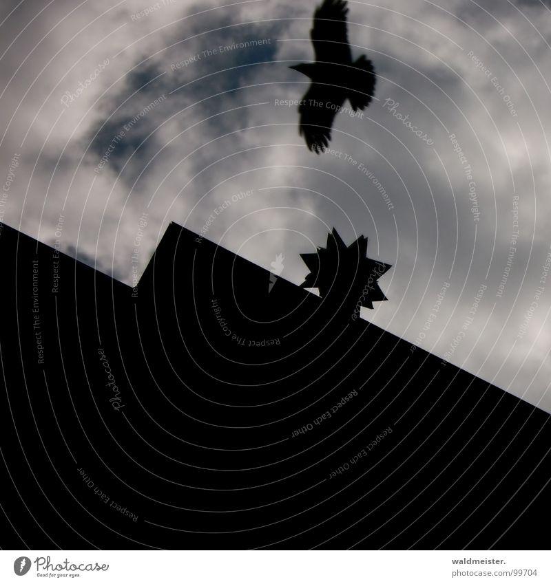 Sky Old House (Residential Structure) Dark Derelict Ghosts & Spectres  Mystic Eerie Spooky Enchanting Crow Raven birds