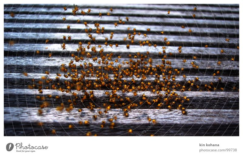 Black Animal Yellow Life Wood Going Birthday Multiple Group of animals Net Protection Trust Discover Many Escape Spider