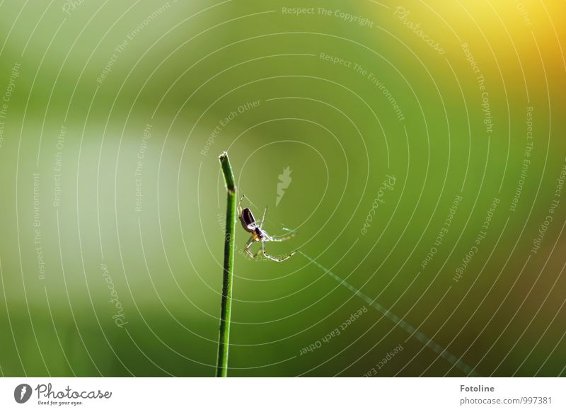 Green Animal Natural Small Bright Free Insect Blade of grass Spider Spider's web Spin Spider legs