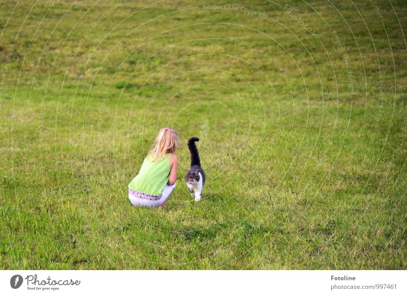 Cat Human being Child Nature Plant Green White Summer Landscape Girl Animal Black Environment Meadow Feminine Grass
