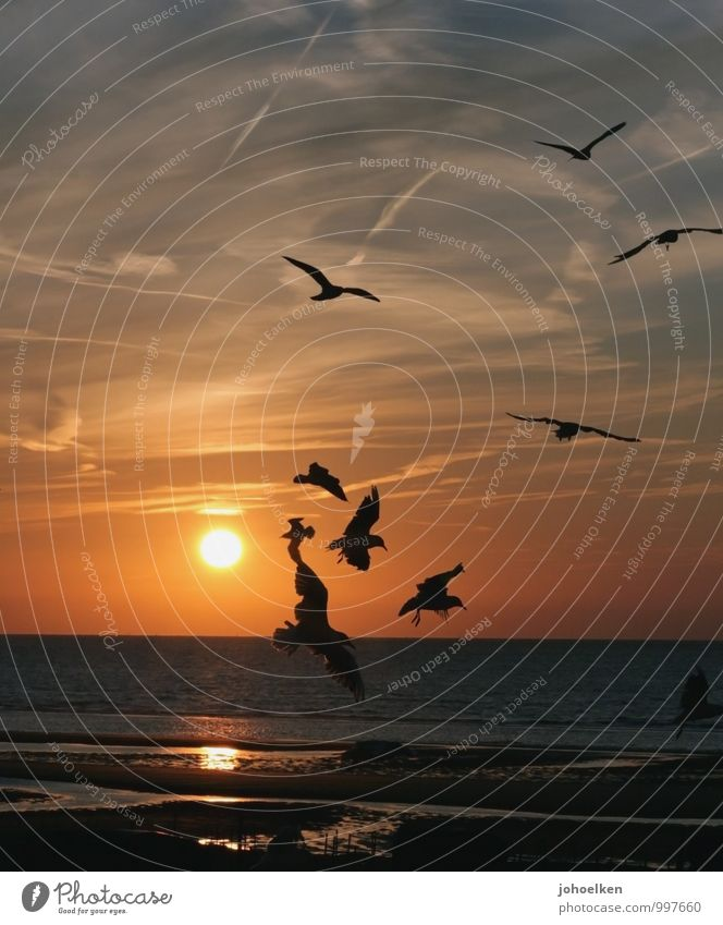 Sky Vacation & Travel Blue Water Summer Sun Ocean Calm Clouds Beach Far-off places Coast Freedom Flying Sand Bird