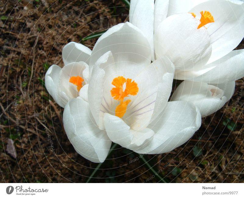 White Flower Green Grass Brown Earth April