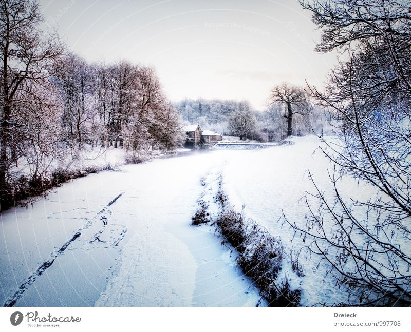 f(l)us tracks Environment Nature Landscape Winter Snow Snowfall Tree River bank Freeze Cold White Colour photo Deserted Day
