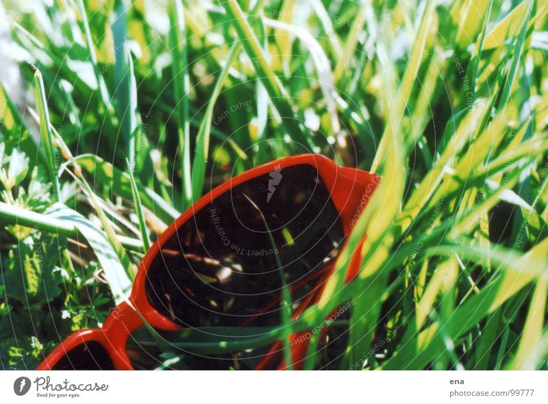 eyeglass grass Grass Green Eyeglasses Sunglasses Summer Discarded Juicy Worm's-eye view Spring Lie Elbe Grassland on the Elbe River green-red-contrast Nature