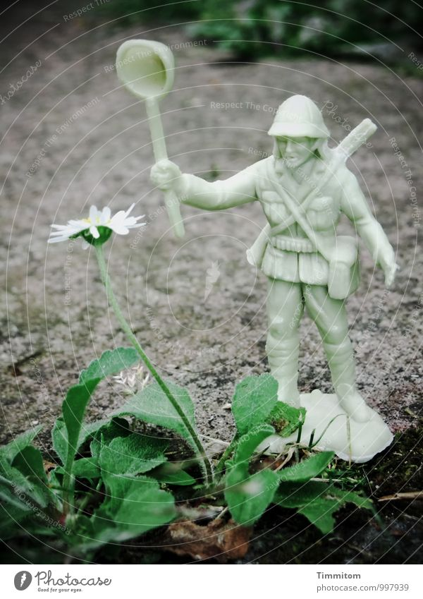 That's extraordinary. The fight with the daisy. Environment Nature Plant Leaf Blossom Daisy Garden Toys Stone Plastic Observe Fight Threat Dark Gray Green White
